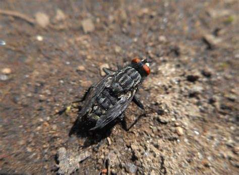 Fly, Wildlife, Insect, Soil, Fauna