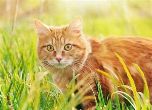 Pancreatic Cancer In Cats
