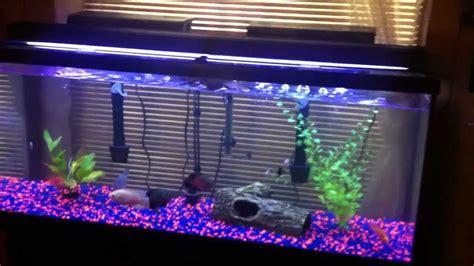 gallon tank setup  oscars pacu  parrot fish