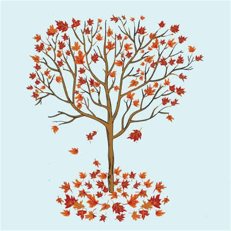 Shedding In Fall by Stock Illustration Tree Dropping Leaves In Autumn