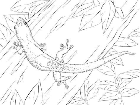 ausmalbilder gecko zum ausdrucken kostenlos fuer kinder