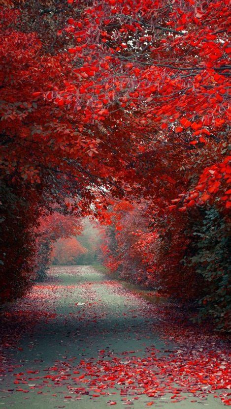 Fall Road Iphone Wallpaper by Autumn Leaves Road Wallpaper Iphone Wallpaper Iphone