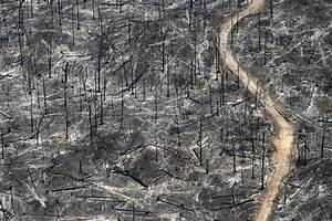 Photo Story: Aerial Images of Deforestation in the Amazon ...