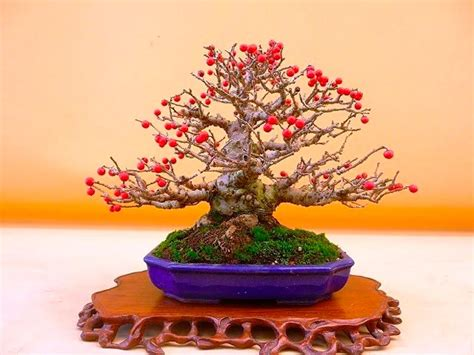 Pictures Of Flowering & Fruiting Bonsai Trees Will Make