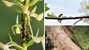 Ameisen Im Blumenbeet : gastartikel 6 faszinierende wege wie zimt ihren garten verbessern kann ~ Whattoseeinmadrid.com Haus und Dekorationen
