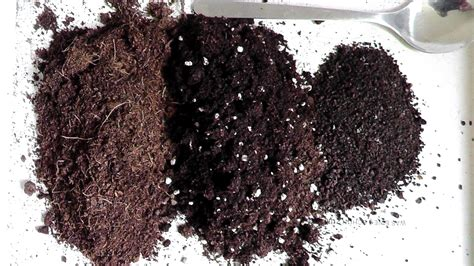 potting soil how to make potting soil www pixshark com images galleries with a bite