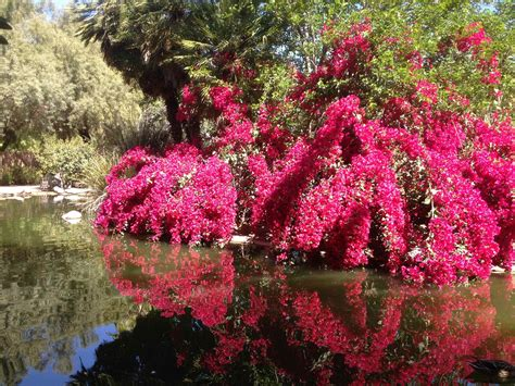 blooming trees in springtime in the desert thirdeyemom