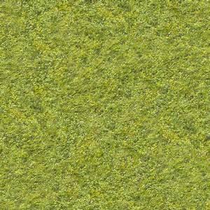 Grass0031 - Free Background Texture - grass short green ...