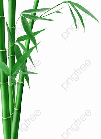 Bamboo Clipart Transparent Plan Leaves