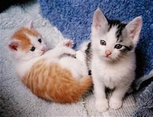 Mit Katze Umziehen : tor gewonnen wir 10 niedliche maik tzchen berlin ~ Michelbontemps.com Haus und Dekorationen