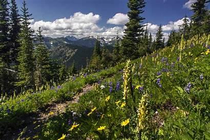 Crest Trail Pacific Wilderness Pasayten Northern Ridge