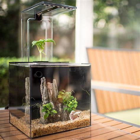 herb growing ecosystem aquarium didnt   wanted