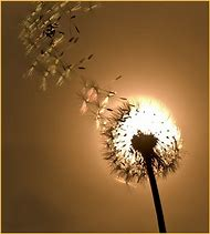 Make a Wish Dandelion