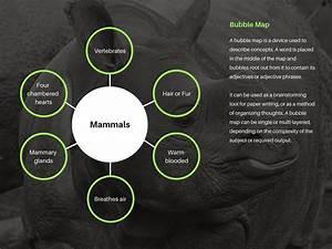 Crea Incre U00edbles Mapas De Burbujas Online Gratis Con Canva