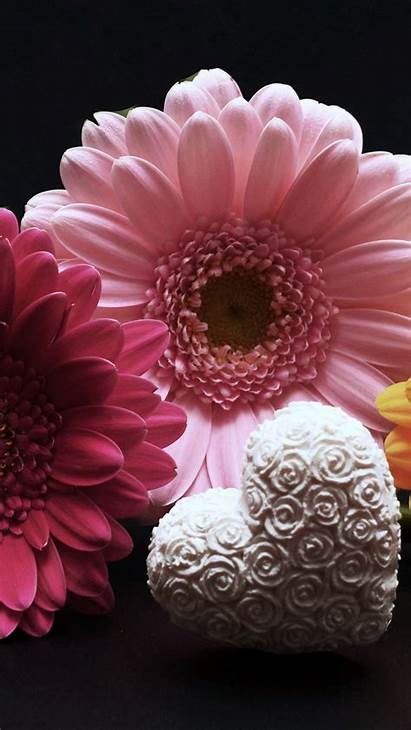 Gerbera Valentines Heart Flower Parallax 6s Iphone