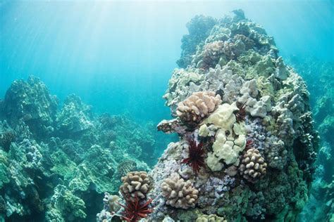 Banana Boat Sunscreen Coral Reef by Hawaii Is Banning Sunscreens That Kill Coral Reefs Vox