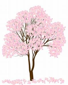 Rosa Blühender Baum Im Frühling : bl hender baum des rosa fr hlinges lokalisiert auf wei ~ Lizthompson.info Haus und Dekorationen