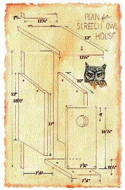 totally   wishlist wednesday  owl box
