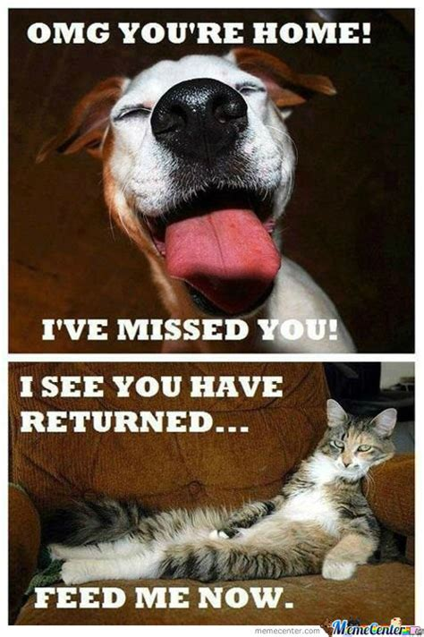 Dog And Cat Memes - cats vs dogs memes best collection of funny cats vs dogs pictures
