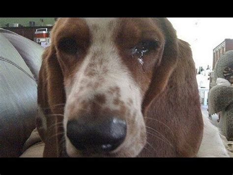 dogs crying dead owner friend  people cry