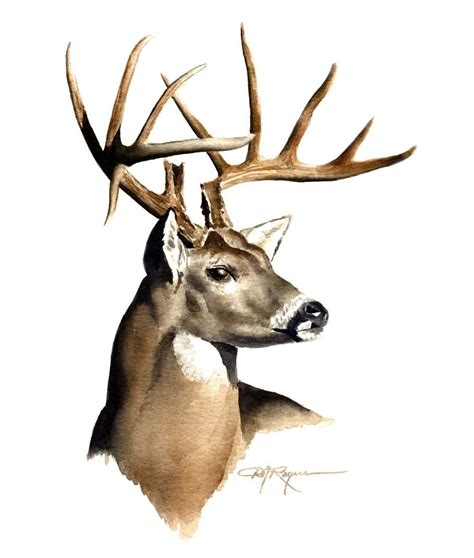 white tailed deer clipart    clipartmag