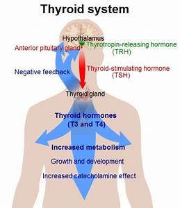 Thyroid Cancer Symptoms – Types, Cause and Treatment Overview