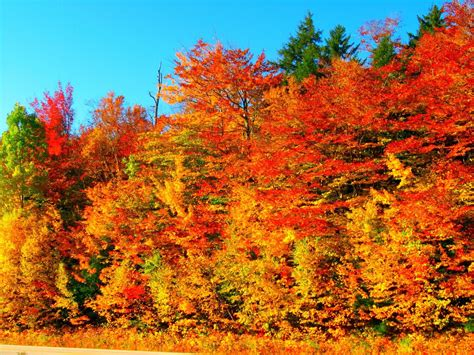 Why Experts Say Fall Foliage Will Be Especially Vibrant