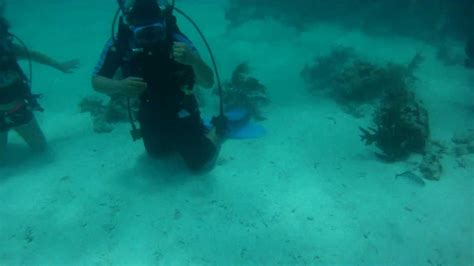 scuba diving   florida keys youtube