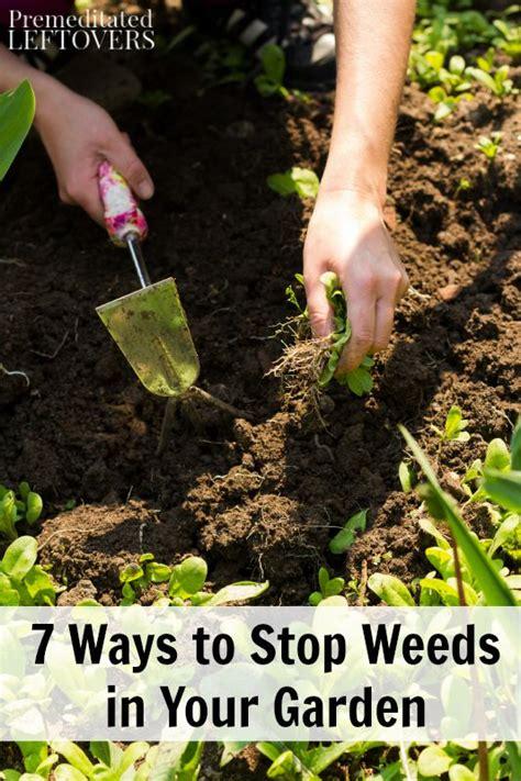 prevent weeds in garden 7 ways to stop weeds in your garden