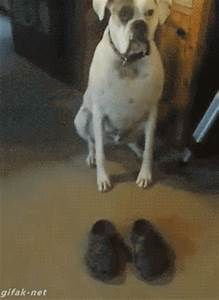 Funny Dog Walk GIFs - Find & Share on GIPHY