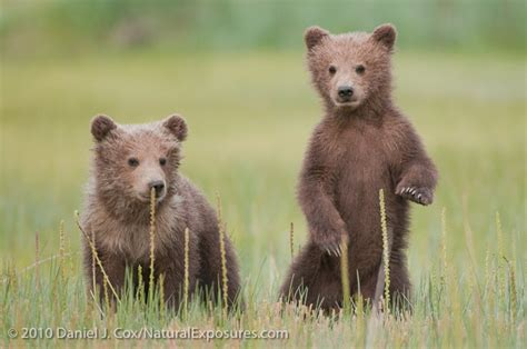 The Bears Of Lake Clark National Park