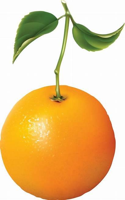 Orange Oranges Naranja Transparent Fruit Purepng Naranjas