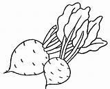 Coloring Beet sketch template
