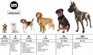 medium sized dog breeds chart – ExploreDogs.com