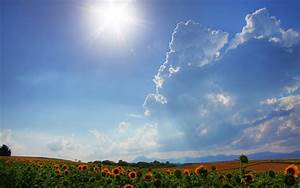 Wallpaper sunflower, sun, field, landscape, summer, sky ...