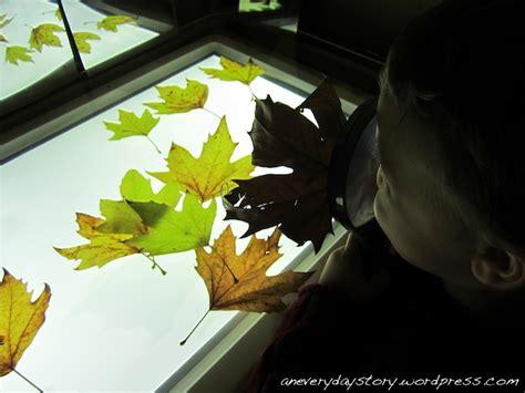 reggio emilia light table autumn leaves a new project