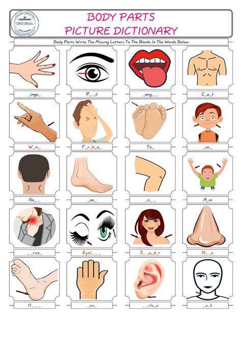 body parts worksheet esl  body parts worksheet