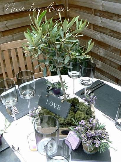 Mariage Decoration Provencal Theme Tree Olivier Provence