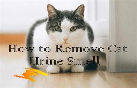 Remove Cat Urine Smell From by 11 Effective Home Remedies For Cat Urine Odor Removal