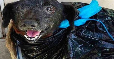 once this shelter dropped breed labels its dogs got this senior was abandoned at a shelter in a plastic