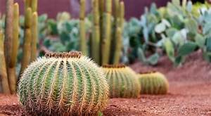 Comment Entretenir Un Cactus : cactus vari t s entretien floraison rempotage ~ Nature-et-papiers.com Idées de Décoration
