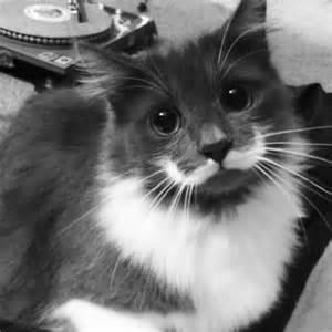 hamilton the cat hamilton the cat pets