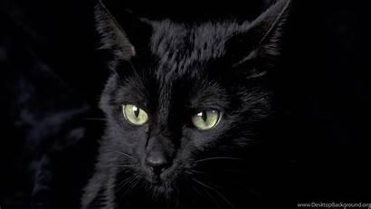 Cat Desktop Wallpapers Background Backgrounds Kitten Cats