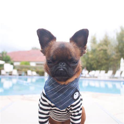 meet gizmo  grumpy dog    hes