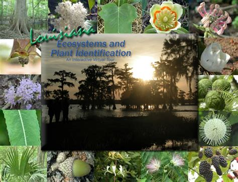 louisiana plant identification and interactive ecosystem