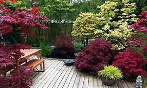 Erable Du Japon Entretien : rables du japon groupon ~ Nature-et-papiers.com Idées de Décoration