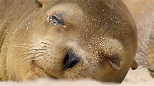 Baby Sea Lions | www.pixshark.com - Images Galleries With ...