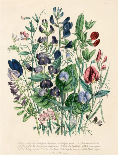 how to make botanical prints 1000 images about art botanicals engravings on pinterest botanical illustration botanical