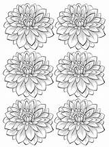 Coloring Adult Flower Dahlia Flowers Colorare Fiori Adults Printable Adulti Disegni Six Fleurs Vegetation Vegetazione Blumen Justcolor Flores Coloriage Malbuch sketch template