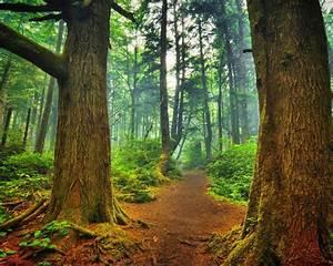 Green Nature Forest Wallpaper
